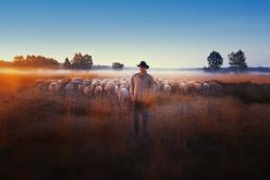 SHEEP-HERO-main-still-you-can-crop-if-you-want-optimized.jpg