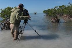 020-Making-Of-Everglades-result.JPG
